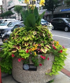 Summer 2014 flowers